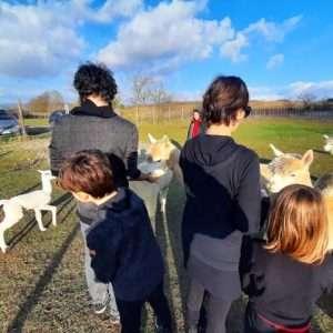 Visita Allebamento Albus Alpacas