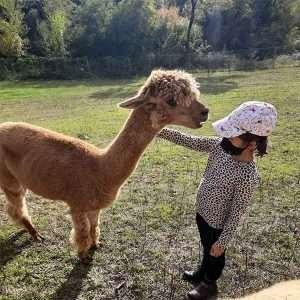Visita alpaca Gennaio