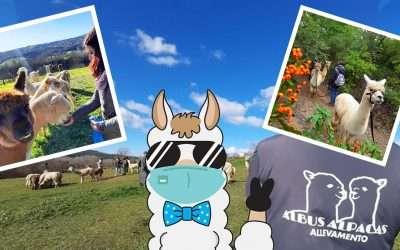 Alpaca Trekking e Visite Allevamento Aprile 2021 in Zona Arancione