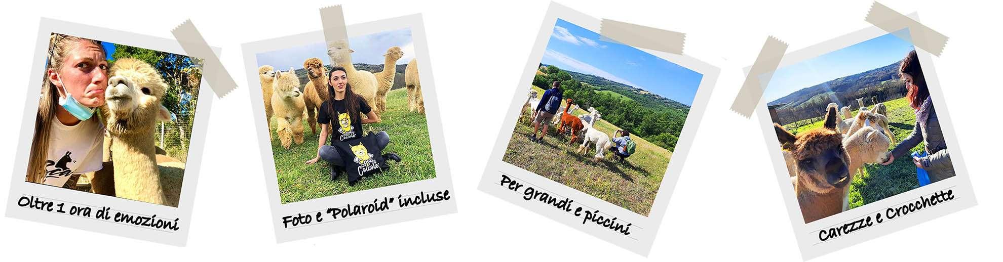 Polaroid Esperienza Alpacosa da Albus Alpacas
