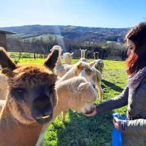 visita alpaca dicembre